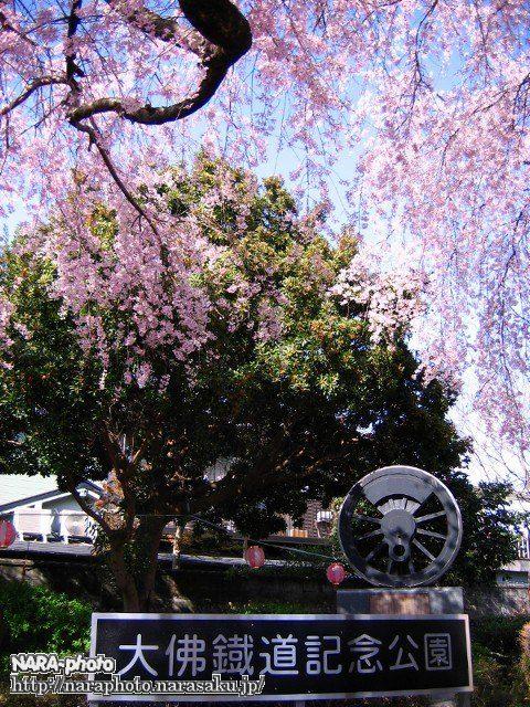 大仏鉄道記念公園の枝垂れ桜