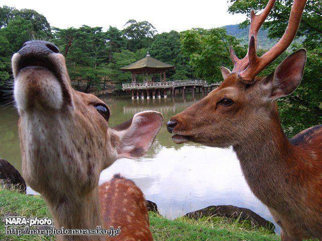 鹿の妨害工作3
