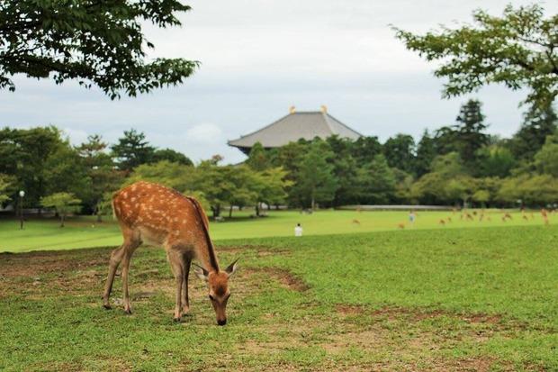 12_奈良公園_preview