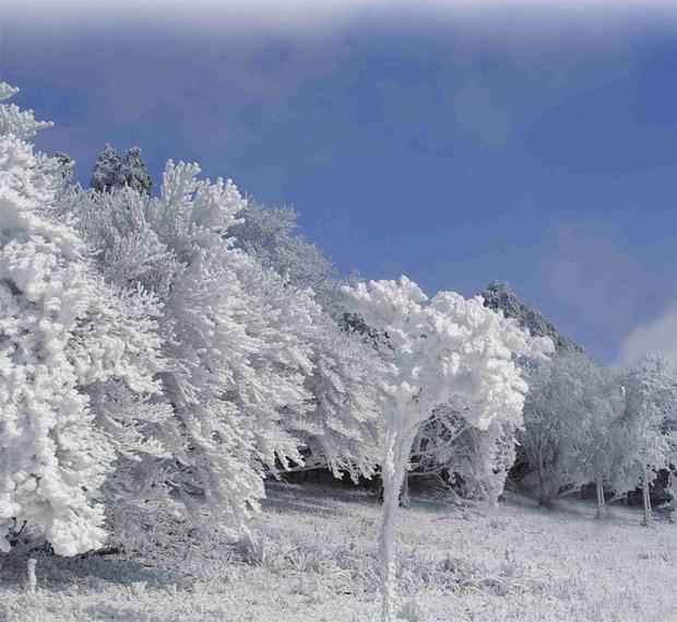 霧氷まつり
