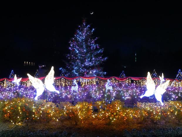 イルミネーション(クリスマスツリー)