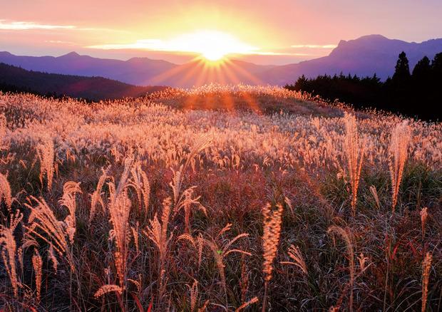 草原の輝きj