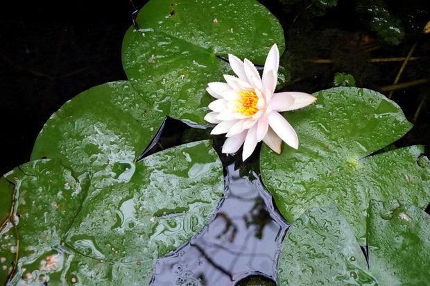 四季折々の花が美しい