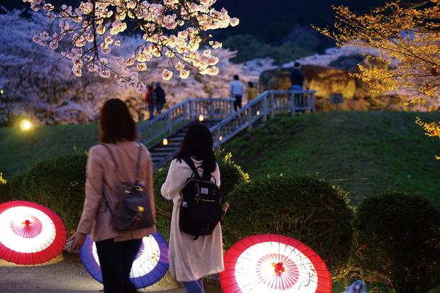 石舞台★夜桜ライトアップ