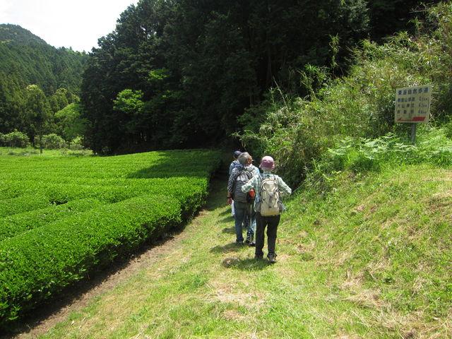 4.茶畑IMG_9361