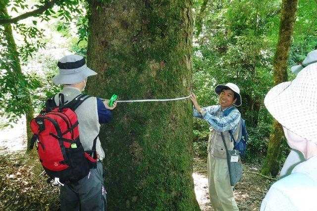 _DSCF0023  モミの巨木で周長実測体験。高さ1.5位置で。