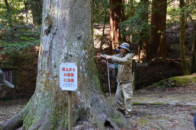 10.DSC_005地上高1.3位置で4.15あった。3m以上を巨木という。