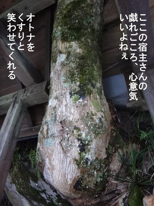 69、福島県二股温泉、柏旅館8