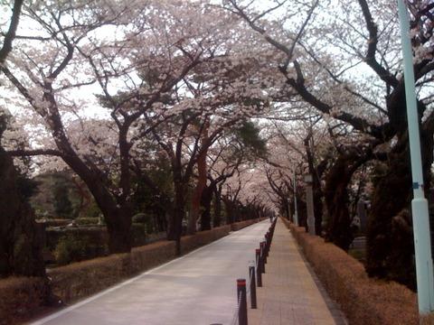 散歩 2011 4月 5
