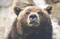 クマが部屋のガラス戸破り住宅に侵入 住民1人けが 岩手 花巻