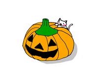 かぼちゃねこ03