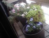 我が家の春1