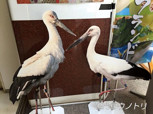 徳島県鳴門市 鳴門のコウノトリ 2羽 パネル 看板