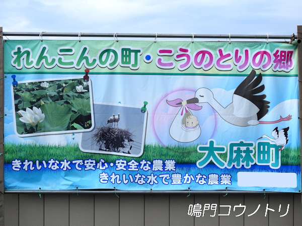 徳島県鳴門市大麻町 コウノトリ 電柱 巣 周辺 工事現場