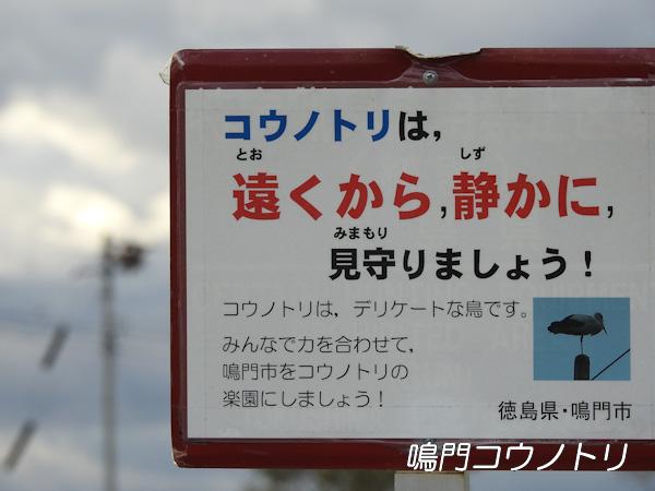 徳島県鳴門市 コウノトリ 鸛 巣 周辺 注意喚起 看板