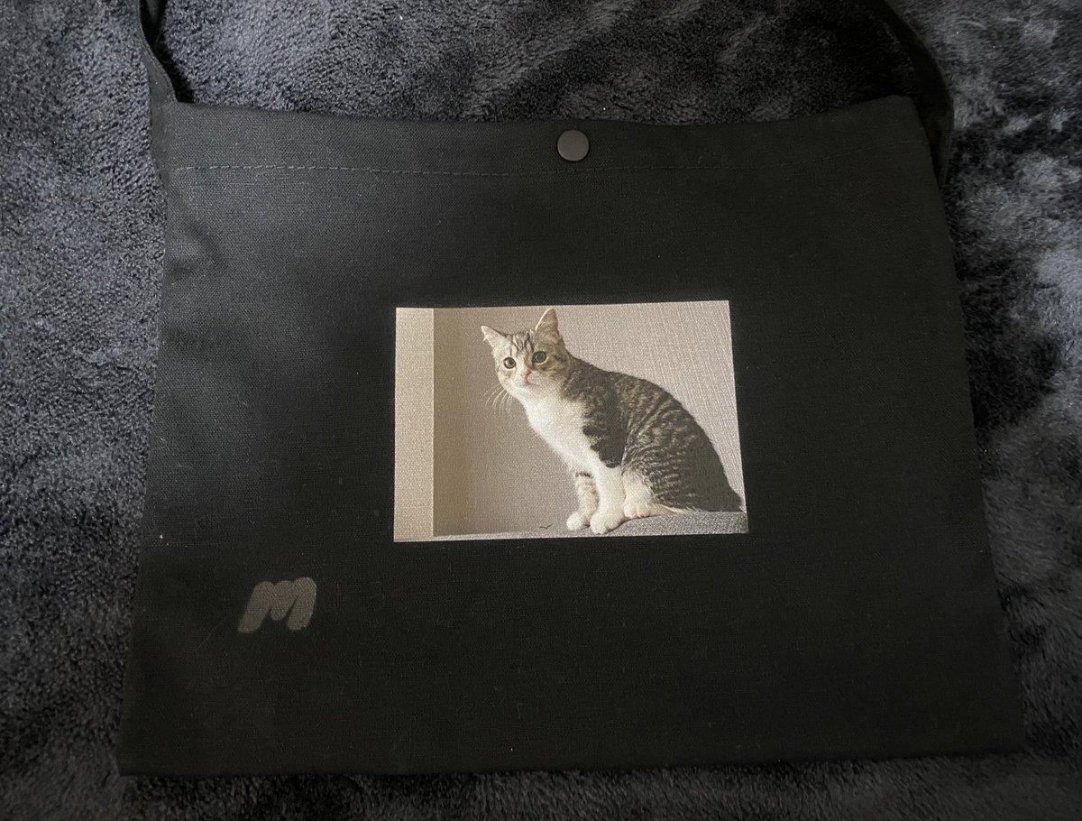猫 もち まる