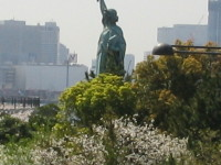 自由の女神桜