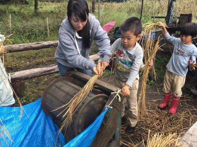 稲刈り_181015_0051