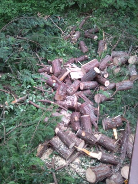 伐採20170623001