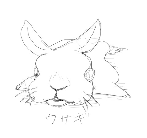 動物追加ウサギ