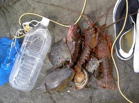 楽しい夏の素潜り漁4