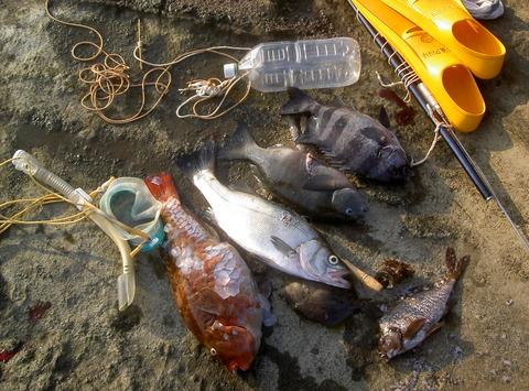 楽しい夏の素潜り漁5