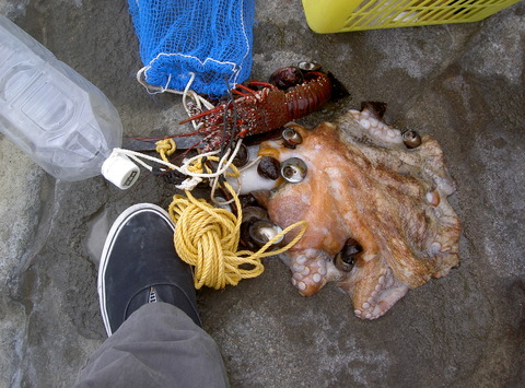 楽しい夏の素潜り漁3