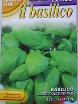 Basilico dolce per vasi