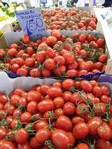 楕円トマト