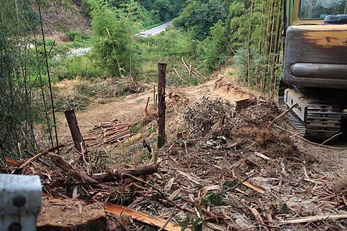 愛知の田舎で古民家暮らし : 間伐ではなく、ひと山全ての木の ...