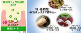 植物性乳酸菌サプリメント