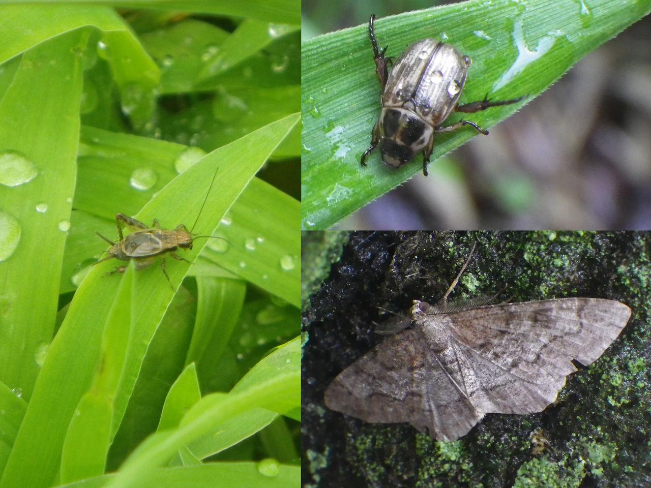 雨の日の昆虫