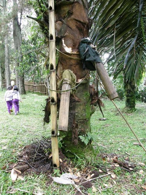 Palmsaftgewinnung2