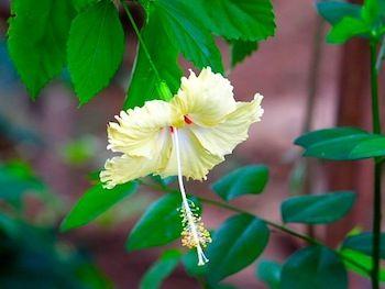 flowers-bunga-raya-kuning-putih-merah