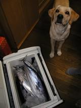お魚さんが・・・