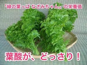 なざみちゃん栄養価葉酸