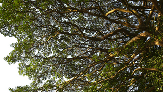 20100109桜山神社_09