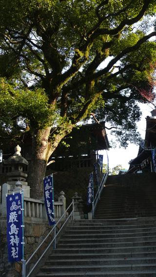 20100109厳島神社_001