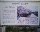 桜撮影4月5日その2