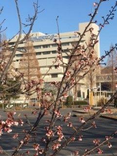 春 東病院 (240x320)