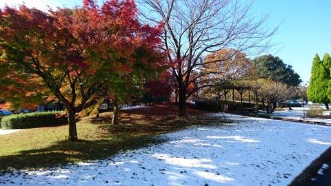 20161125  サイズ640×360 PCUお庭 雪景色と紅葉 (44)