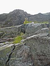 2009Aug7-8北岳11