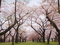 spring_hakodate_2_1