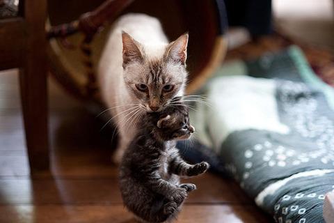 ff14猫