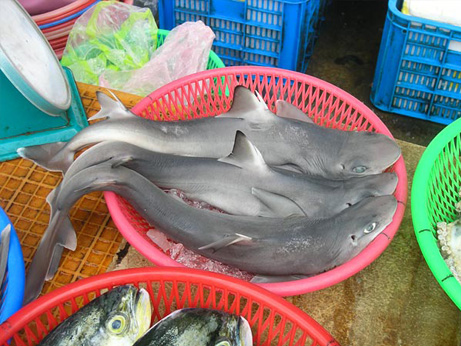 new-species-shark-found-fish-market_39873_big