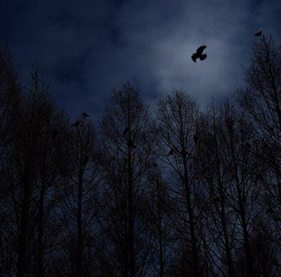 闇が深い画像