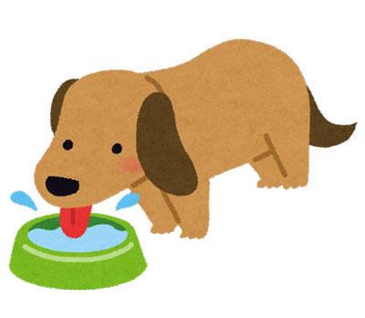 水を飲んでいる犬