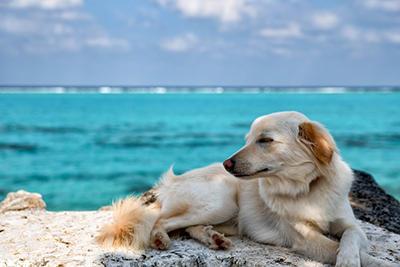 犬かわいい