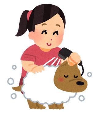ペットの犬にシャンプーをして体を洗っている女性