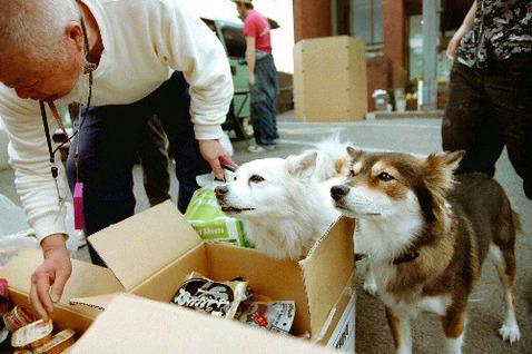 犬 避難所